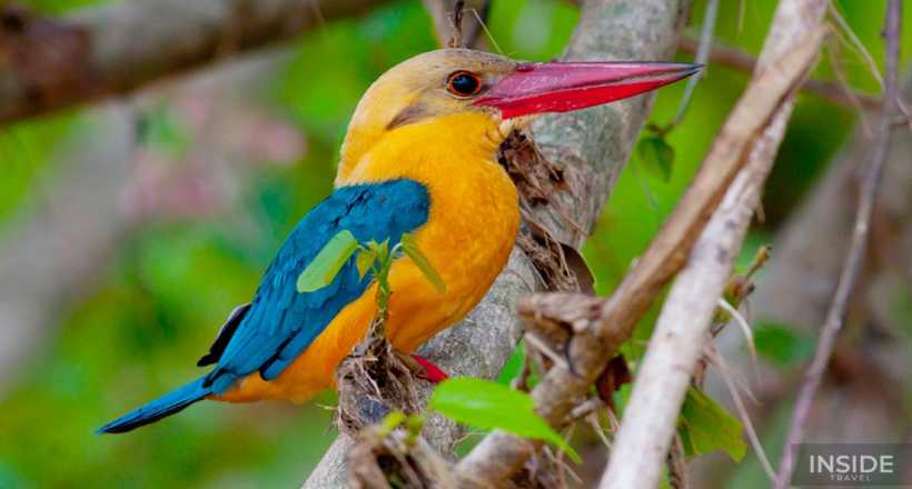 Nature Escape & Birdwatching in Philippines