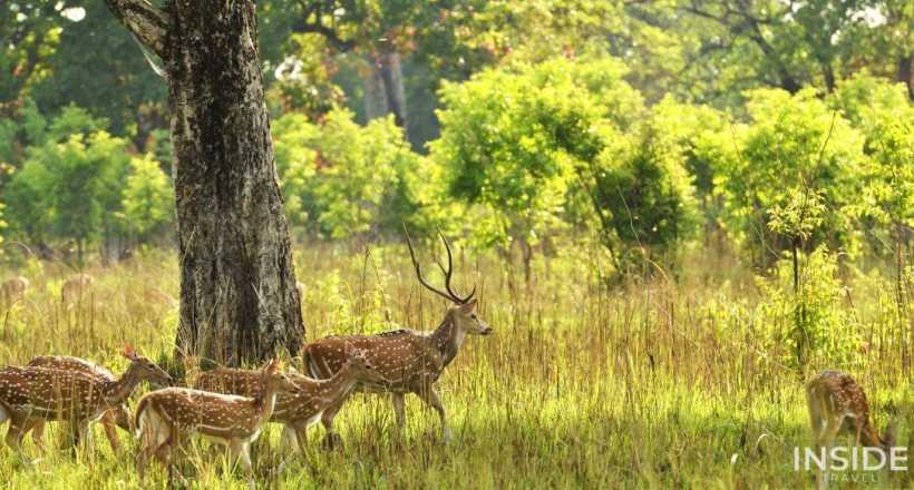 Nepal Wildlife Exploration